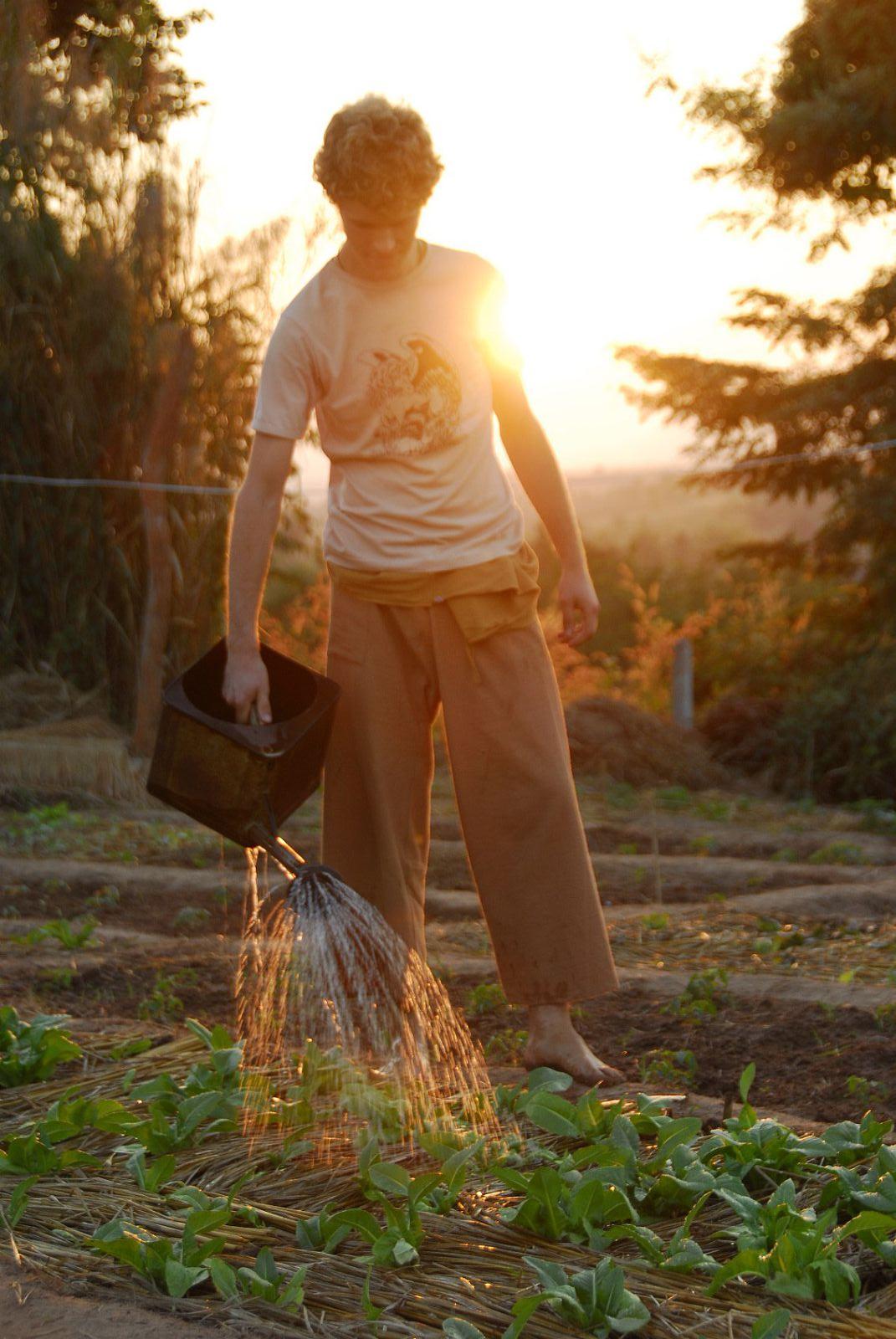 thailande ferme hippie 6