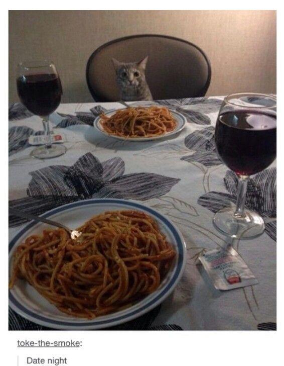 femme célibataire chat