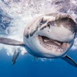 Elle pose avec les requins pour une photo Instagram, car elle n'a pas vu de panneau avertissant du danger